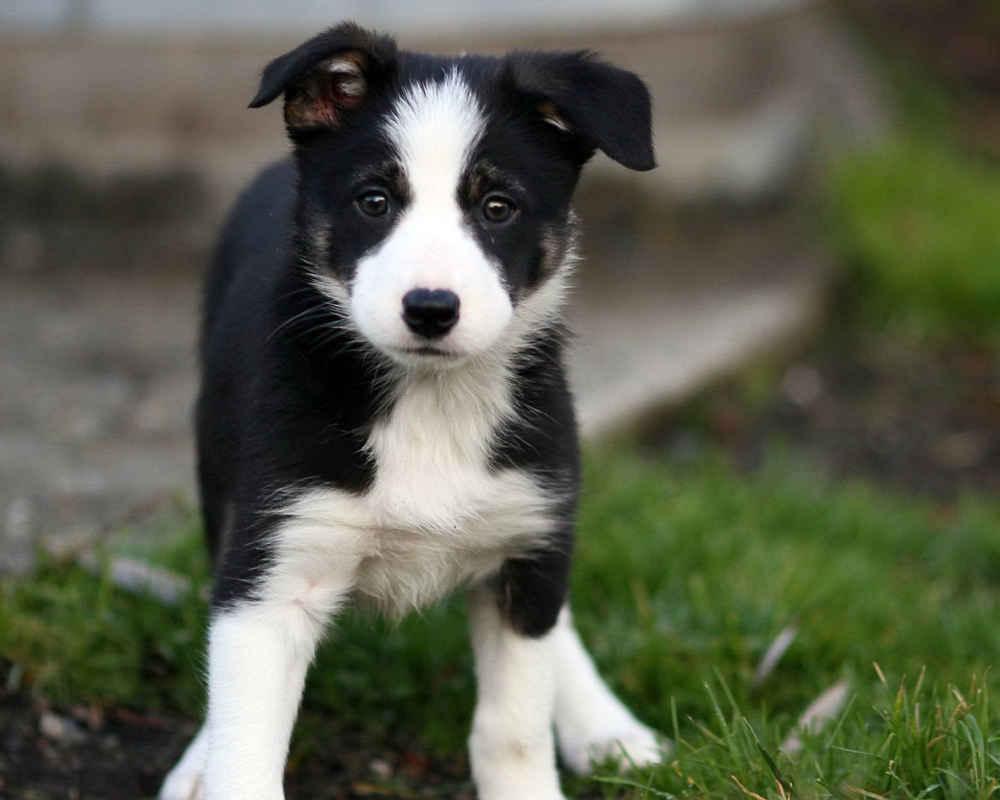 аллергия у собак на порошок
