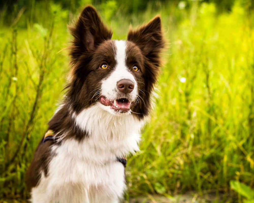 аллергия на собак симптомы прыщи