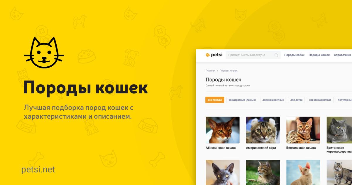 Фотографий все породы кошек мира thumbnail